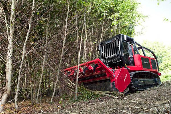 Расчистка территории от деревьев и кустарников